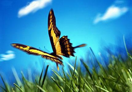 La lezione della farfalla - Immagini di farfalle a colori ...